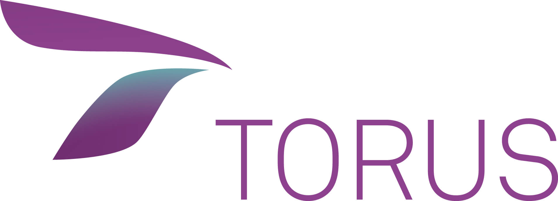 torus-color-1